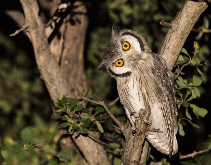 Your Brain Decides it's an Owl – Five Ways to Make Your Nights Effective