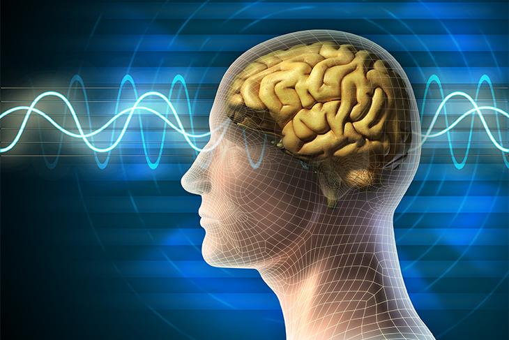 תוצאת תמונה עבור חקר המוח מיינדפולנס